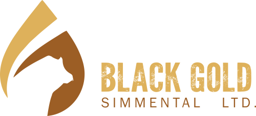 Black Gold Simmental